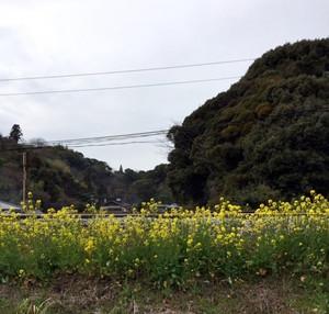Nanohana44